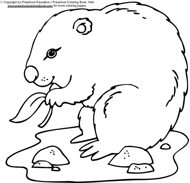 Coloring pages groundhog day for Groundhog coloring page